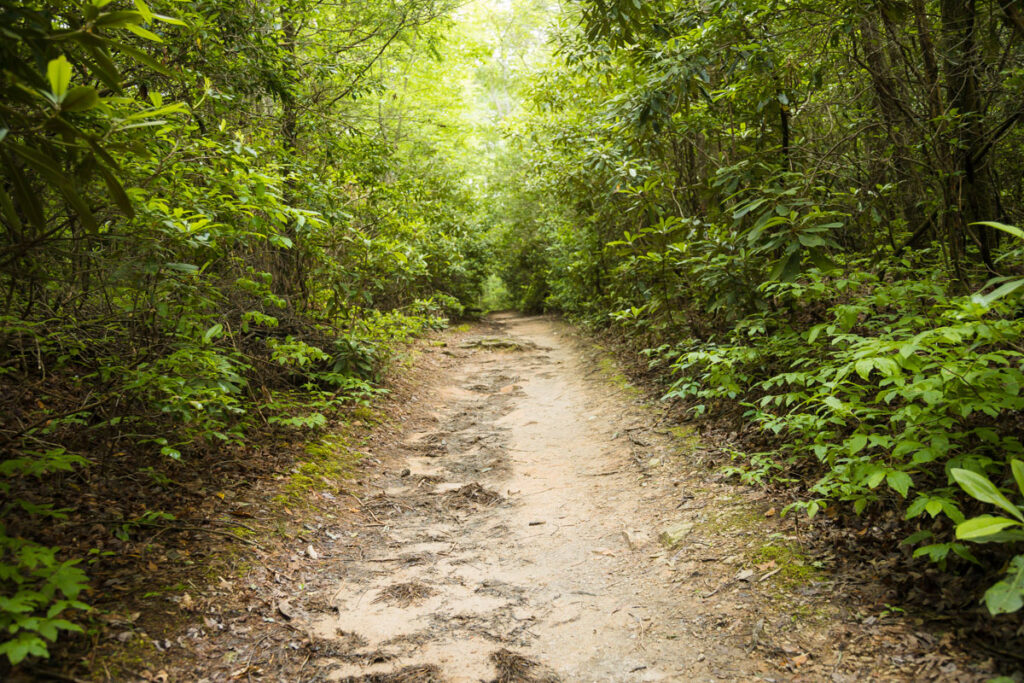 Picture of the trail at Flat Laurel Creek
