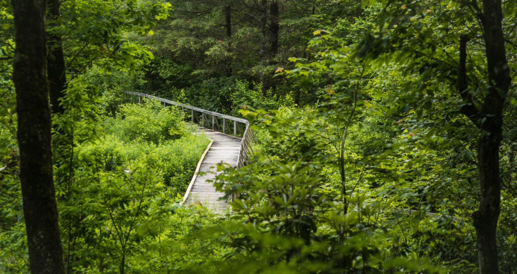 I view of the broadwalk on Pink Beds Trail in Pisgah