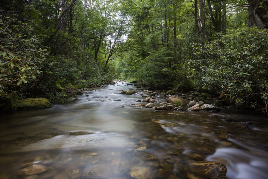 View of the river above whaleback falls
