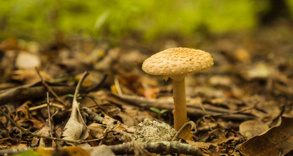 Mushroom growing on the forest floor
