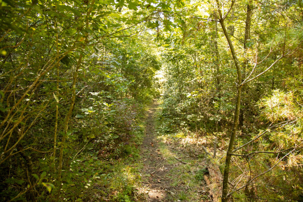 View of the moss covered trail on Cemetery loop.